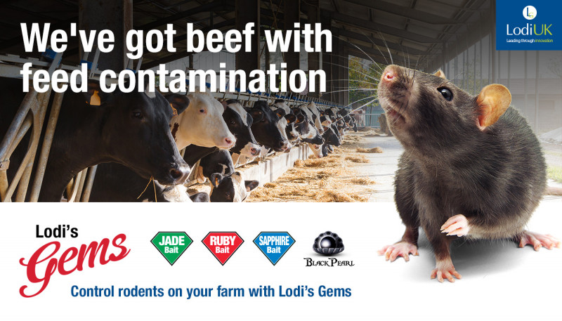 How To Reduce Feed Contamination By Rodents