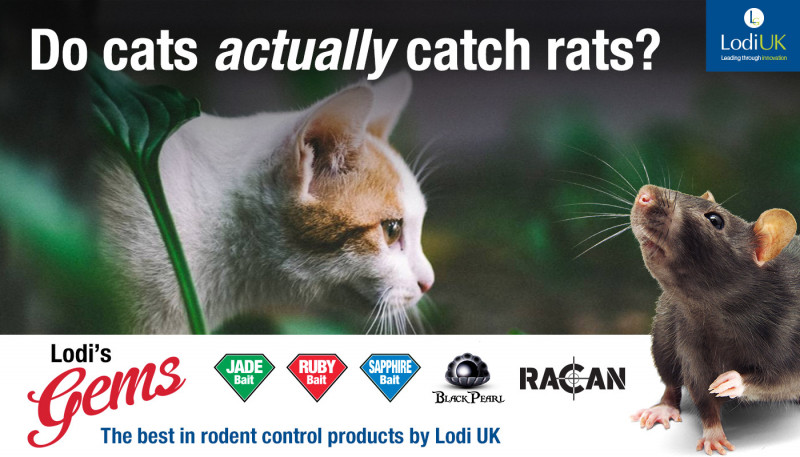 How Good Are Cats At Catching Rats?
