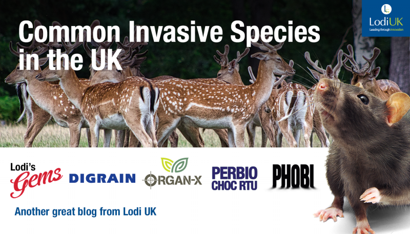 Common Invasive Species in the UK