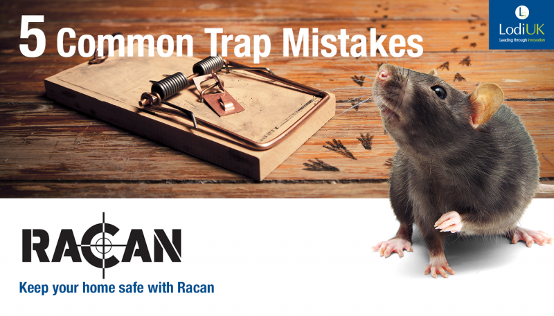 5 Mouse Trap Mistakes You Might Be Making