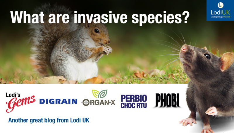 What Are Invasive Species?