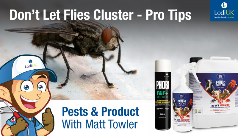 Treating Cluster Flies - Matt Towler