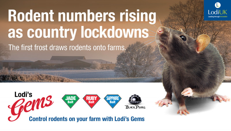 Rodent Numbers Rising as Country Lockdowns