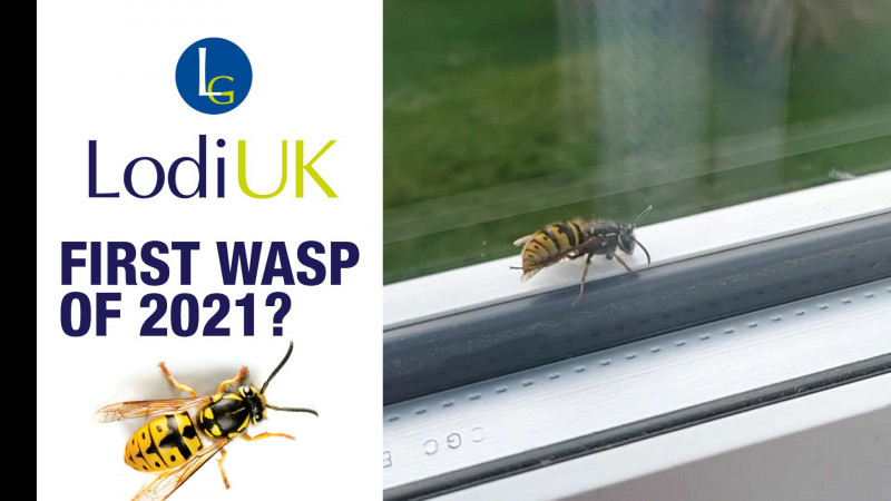 The First Wasp Of 2021!